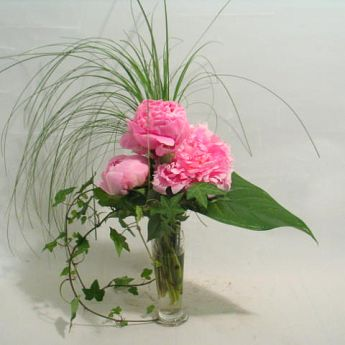 Bouquet de pivoines: livrable: agglom�ration de Berne